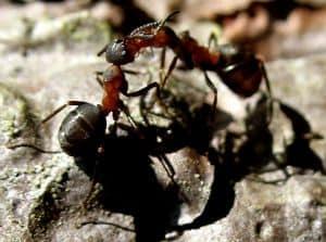 Hausmittel gegen Ameisen in Haus und Garten