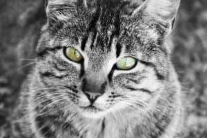 Katzen die unter Darmwürmern leiden können mit natürlichen Wurmkuren und Entwurmungsmitteln behandelt werden