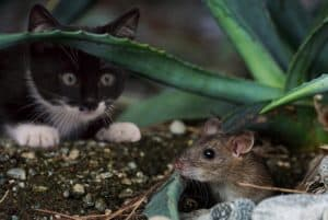 Um Wurmbefall vorzubeugen sollten Katzen keine Mäuse fressen