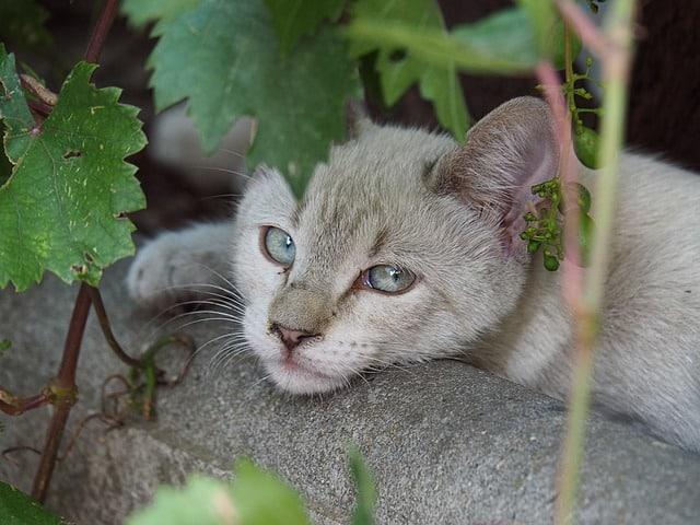 Katze spuckt weißen schaum