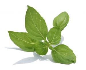 Basilikum ist ein natürliches Schmerzmittel das auch gegen Hexenschuss als Hausmittel hilft.
