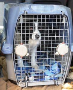 Behandlung bei einem eingeklemmten Nerv beim Hund: Die Bewegung einschränken