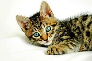 Bei Katzen Durchfall können einfache Hausmittel und Schonkost dünnflüssigen Stuhl beheben