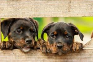 Besonders Hundewelpen leiden unter Milben