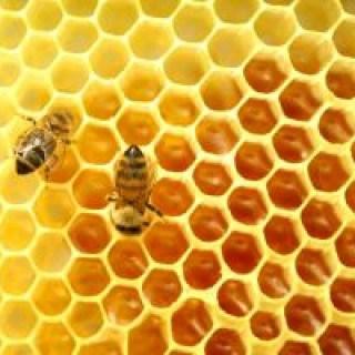 Das alte Hausmittel Honig hilft gegen tiefliegende, dicke und schmerzende Pickel die unter der Haut liegen