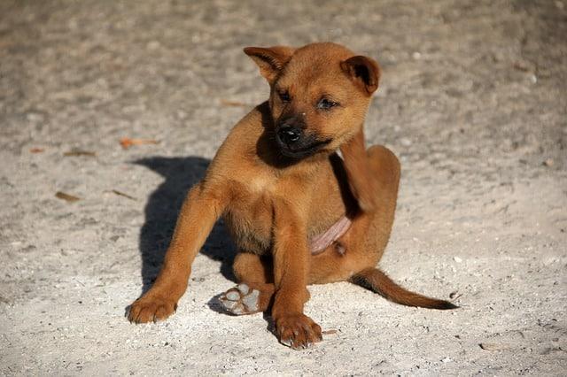 Juckreiz Beim Hund Lindern Hausmittel Gegen Juckreiz Bei Hunden