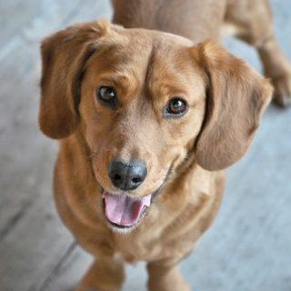Die besten natürlichen Hausmittel gegen Würmer bei Hunden sind pflanzlich und ohne Nebenwirkungen