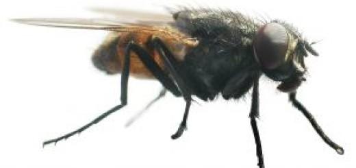 Gallensteine aufl sen hausmittel gegen gallensteine for Fliegen hausmittel