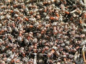 hausmittel gegen ameisen in haus und garten jetzt lesen. Black Bedroom Furniture Sets. Home Design Ideas