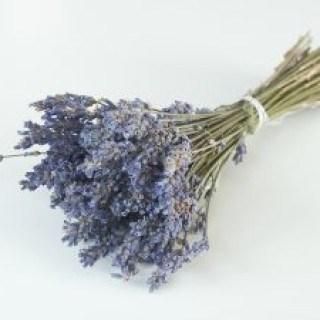 Kleidermotten verteiben mit dem einfachen Hausmittel Lavendel