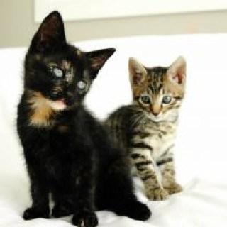 Natürliche Hausmittel helfen gegen Katzenschnupfen, Erkältung und Katzengrippe