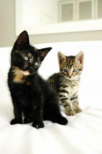 katzenschnupfen hausmittel gegen katzenschnupfen jetzt. Black Bedroom Furniture Sets. Home Design Ideas