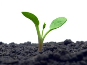 Pflanzen mit Hausmitteln vor Blattläusen schützen.