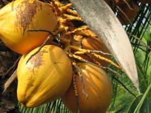 Kokosöl Anwendung für Haut und Haare